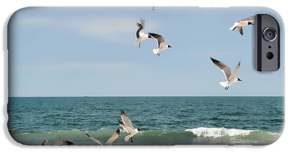 Flying Seagull iPhone Cases - Gulls A Dancen iPhone Case by Diana Angstadt