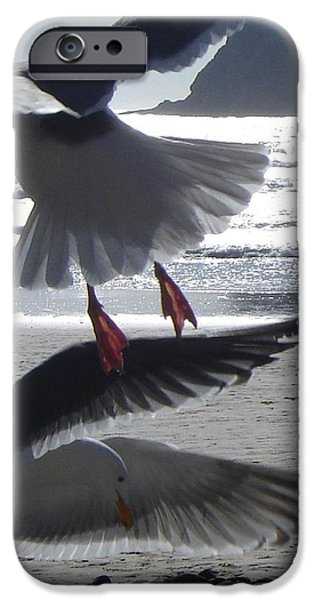 Recently Sold -  - Flying Seagull iPhone Cases - Gulls At Play iPhone Case by De Ann  Troen