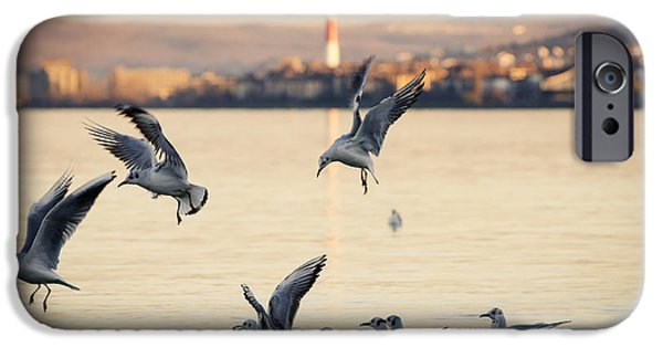 Flight Pyrography iPhone Cases - Gulls iPhone Case by Jelena Jovanovic