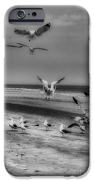 Photos Of Birds iPhone Cases - Gulls iPhone Case by Skip Willits
