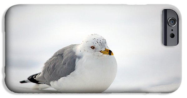 Seagull iPhone Cases - Gulls Winter Pose iPhone Case by Karol  Livote