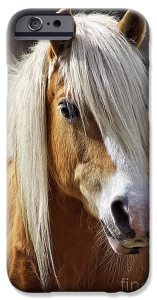 North Sea iPhone Cases - Haflinger horse iPhone Case by Angela Doelling AD DESIGN Photo and PhotoArt