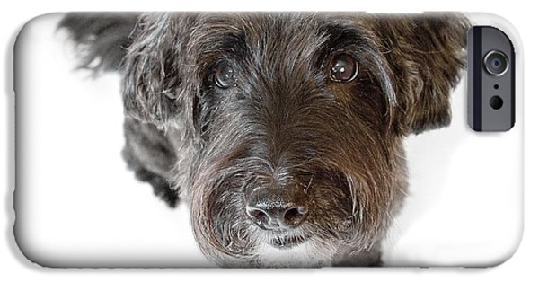 Pups Digital Art iPhone Cases - Hairy Dog Photographic Caricature iPhone Case by Natalie Kinnear