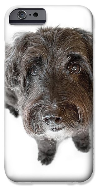 Hairy Dog Photographic Caricature iPhone Case by Natalie Kinnear