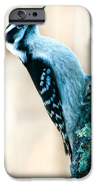 Woodpecker iPhone Cases - Hairy Woodpecker iPhone Case by Bob Orsillo