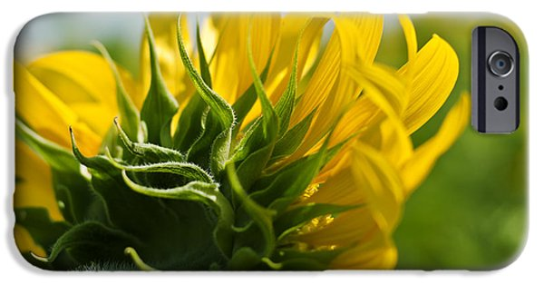 French Open iPhone Cases - Half Sunflower iPhone Case by Nomad Art And  Design