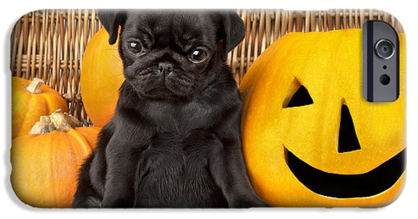 Puppies iPhone Cases - Halloween Pug iPhone Case by Greg Cuddiford