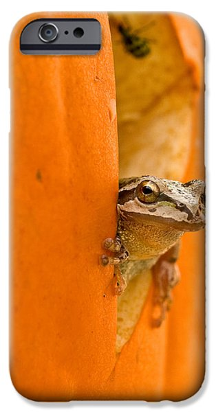 Recently Sold -  - Small iPhone Cases - Halloween surprise  iPhone Case by Jean Noren
