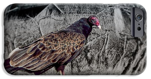 Haunted House iPhone Cases - Halloween Turkey Vulture iPhone Case by Henry Kowalski