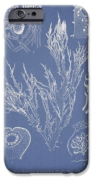 Algae iPhone Cases - Halymenia formosa and Eucheuma Spinosum iPhone Case by Aged Pixel