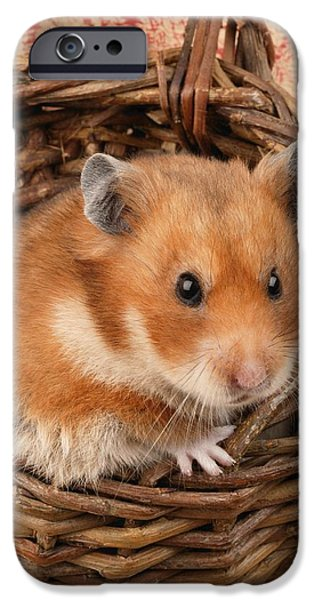 Animals Photographs iPhone Cases - Hamster In Basket iPhone Case by Greg Cuddiford