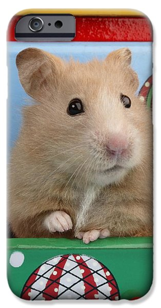 Animals Photographs iPhone Cases - Hamster In Draw iPhone Case by Greg Cuddiford