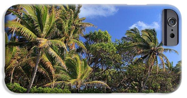 Splashy iPhone Cases - Hana Palm Tree Grove iPhone Case by Inge Johnsson