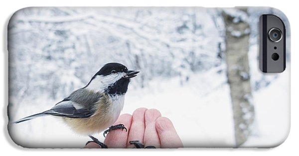 Human Survival iPhone Cases - Hand Feeding A Black-capped Chickadee iPhone Case by Julie DeRoche
