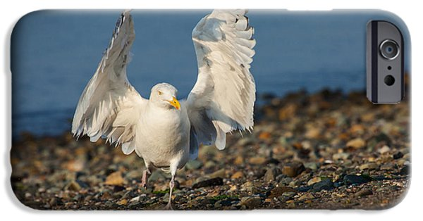 Herring Gull iPhone Cases - Hands Up iPhone Case by Karol  Livote