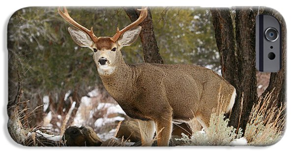 Meadow Photographs iPhone Cases - Handsome Buck iPhone Case by Donna Kennedy
