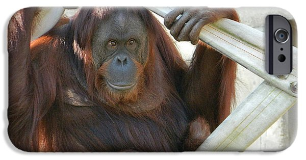 Orangutan Digital Art iPhone Cases - Hanging Out - Melati the Orangutan iPhone Case by Emmy Marie Vickers