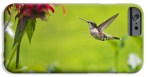 Recently Sold -  - Fauna iPhone Cases - Happiness Hummingbird Garden iPhone Case by Christina Rollo