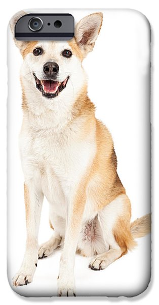 Cattle Dog iPhone Cases - Happy Australian Cattle Dog and Shiba Inu Mix iPhone Case by Susan  Schmitz