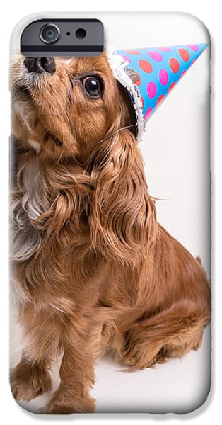 Hats iPhone Cases - Happy Birthday Dog iPhone Case by Edward Fielding