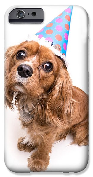 Dogs iPhone Cases - Happy Birthday Puppy iPhone Case by Edward Fielding