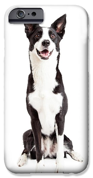 Mixed Breed iPhone Cases - Happy Border Collie Mix Breed Dog Sitting iPhone Case by Susan  Schmitz