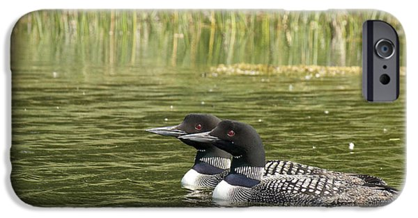 Loon iPhone Cases - Happy Couple iPhone Case by Penny Meyers