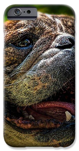 Black Dog iPhone Cases - Happy Dog iPhone Case by Bob Orsillo