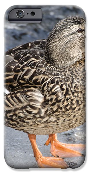 Happy Duck iPhone Case by Ilene Hoffman