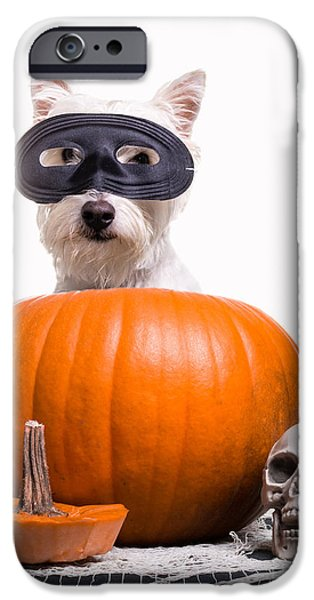 Cute Puppy Photographs iPhone Cases - Happy Halloween iPhone Case by Edward Fielding