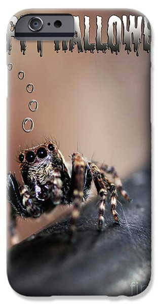 Black Spider iPhone Cases - Happy Halloween for the Spider Lovers iPhone Case by Kaye Menner