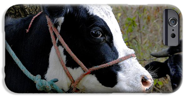 Mower iPhone Cases - Happy Healthy Bovine iPhone Case by Al Bourassa