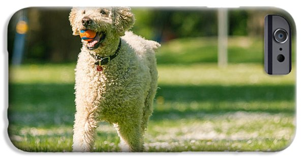 Mixed Labrador Retriever iPhone Cases - Happy labradoodle iPhone Case by Eti Reid