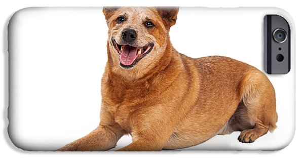 Cattle Dog iPhone Cases - Happy Red Heeler Dog Laying  iPhone Case by Susan  Schmitz