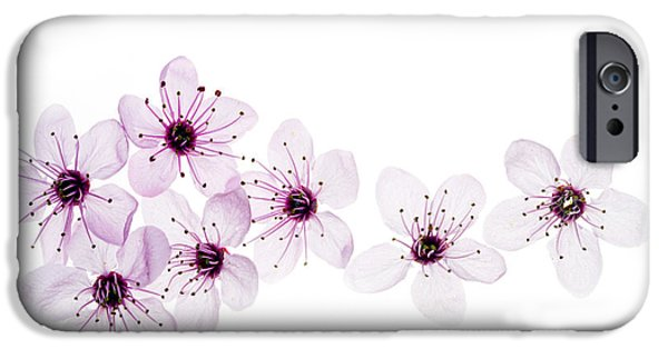 Cherry Blossoms iPhone Cases - Happy Spring iPhone Case by Rebecca Cozart