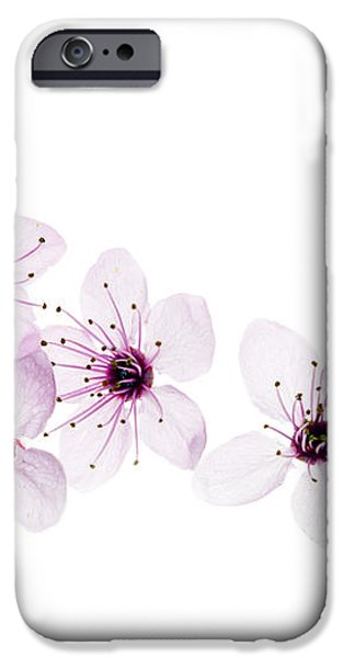Happy Spring iPhone Case by Rebecca Cozart