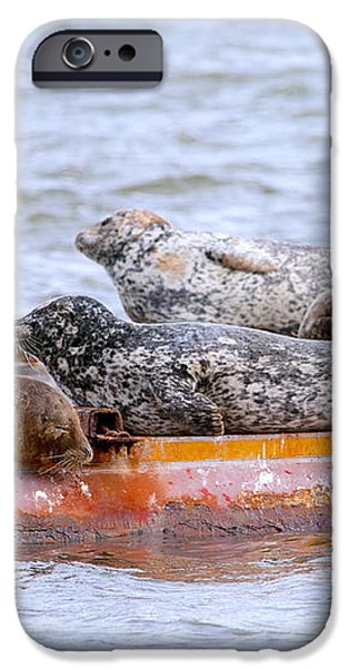 Harbour Seals Lounging iPhone Case by Sharon  Talson