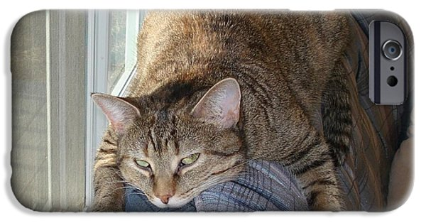 Pictures Of Cats Photographs iPhone Cases - Hard Days Work iPhone Case by Diane Palmer