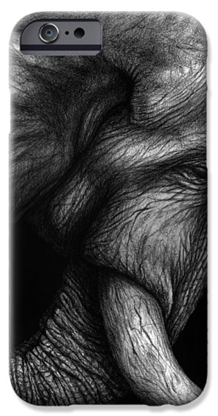African Animal Drawings iPhone Cases - Harness iPhone Case by Danielle Trudeau