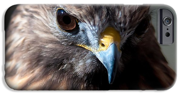 Steadfast iPhone Cases - Harris Hawk   iPhone Case by Alexandr Grichenko