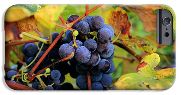 Concord Grapes iPhone Cases - Harvest Smell iPhone Case by Glenn Curtis