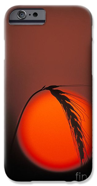 Harvest Sunset - FS000416 iPhone Case by Daniel Dempster