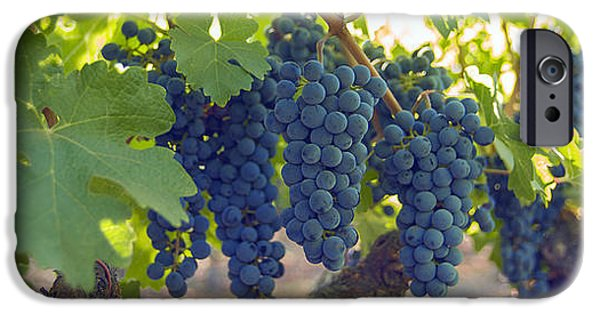 Red Wine iPhone Cases - Harvest Time iPhone Case by Jon Neidert