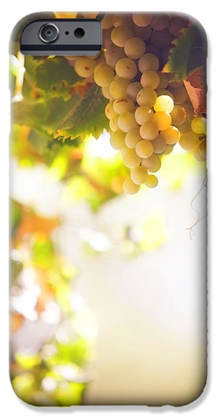 Harvest Time. Sunny grapes I iPhone Case by Jenny Rainbow