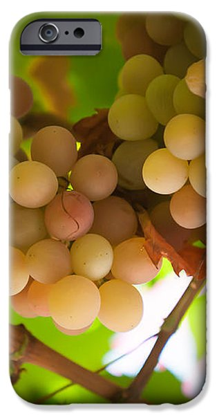 Harvest Time. Sunny Grapes II iPhone Case by Jenny Rainbow