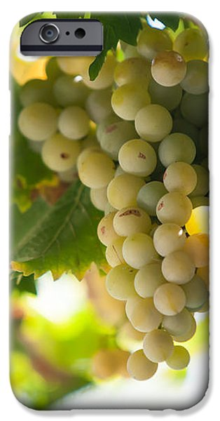 Harvest Time. Sunny Grapes IV iPhone Case by Jenny Rainbow
