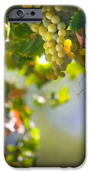 Harvest Time. Sunny Grapes V iPhone Case by Jenny Rainbow