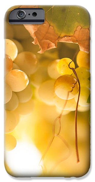 Harvest Time. Sunny Grapes VI iPhone Case by Jenny Rainbow