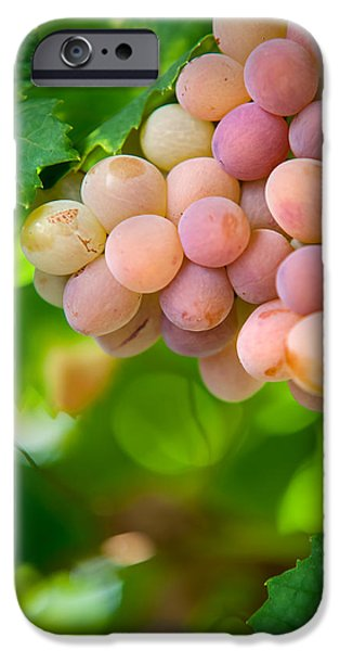 Harvest Time. Sunny Grapes VIII iPhone Case by Jenny Rainbow