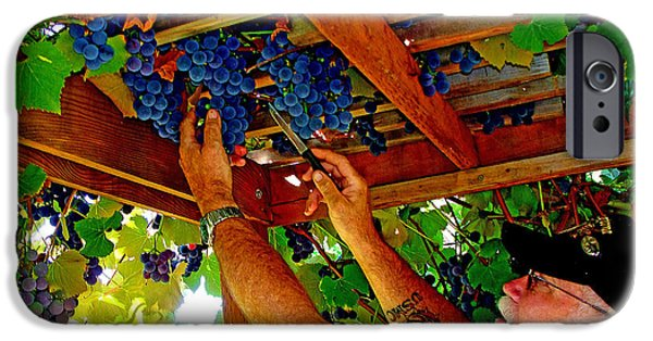 Concord Grapes iPhone Cases - Harvesting iPhone Case by John Langdon